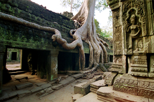 Cambodia, Jungle Temple