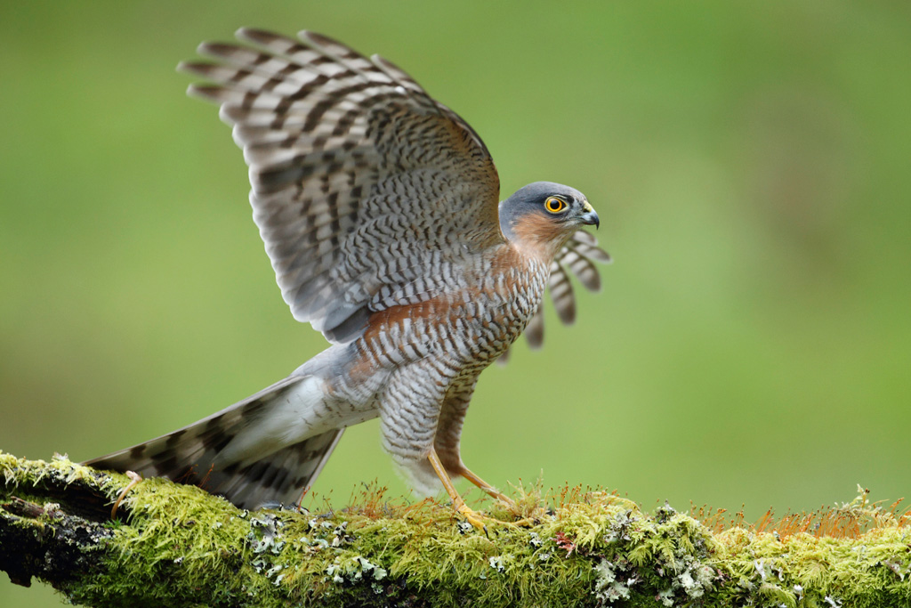 an analysis of the first chapter and the sparrowhawk Chapter 1: introduction this first, it describes the the analysis shows the interaction between several modules of the grammar which traditionally are.